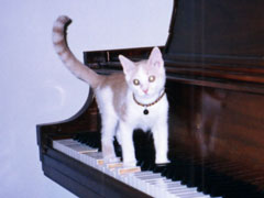 Taro Playing the Piano